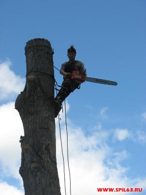Спил, обрезка, кронирование деревьев любой сложности в Самаре и области;