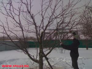 Услуги компании по обрезке плодовых деревьев