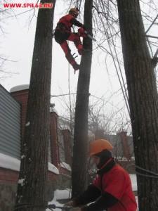 Услуги по обрезке деревьев