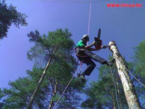 Обрезка деревьев и кустарников - доверьтесь профессионалам!