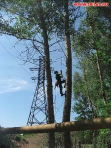 Об этом полезно знать: технология валки деревьев