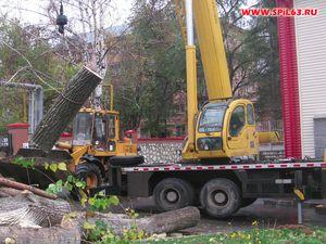 В каких случаях необходима вырубка аварийных деревьев