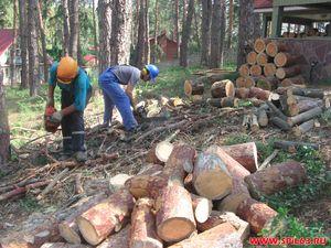 Cтоиомсть спила деревьев