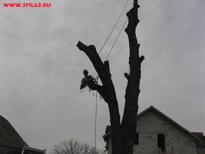 Способы вырубки сухих и старых деревьев