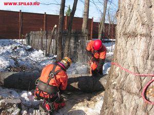 Профессиональная валка деревьев в Самаре: технология и стоимость работ