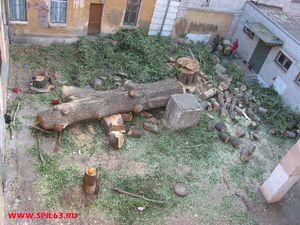 Вырубка деревьев и кустарников в Самаре по доступным ценам