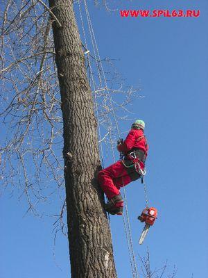 Частичное удаление и формирование крон деревьев в Самаре