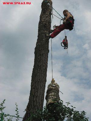 """Спил старых, сухих и больных деревьев. Удаление и обрезка """"под ноль"""""""