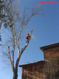 Спил сухих и аварийных деревьев в Самаре